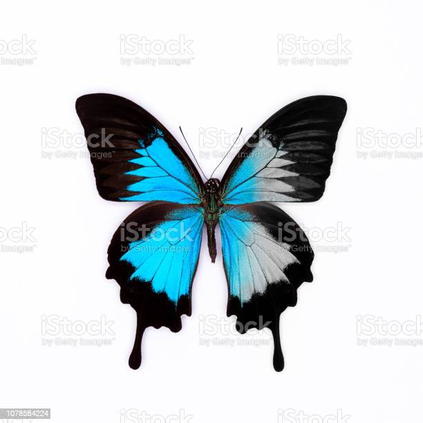 Blue emperor butterfly picture id1078584224?b=1&k=6&m=1078584224&s=612x612&h=avj5vmpf0qlkkkhkcdeu7nks34ism3my89elgrnir8i=