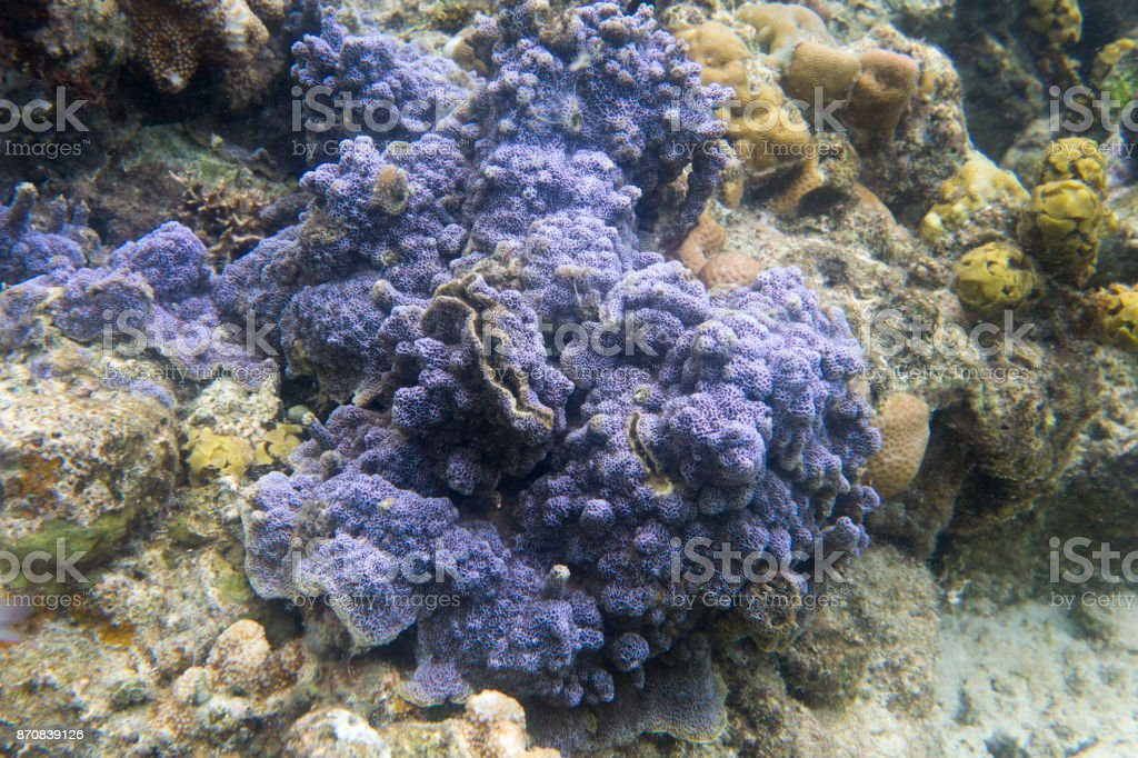 Blue encrusting coral stock photo