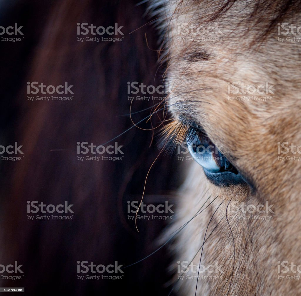 Blue eye of a horse stock photo