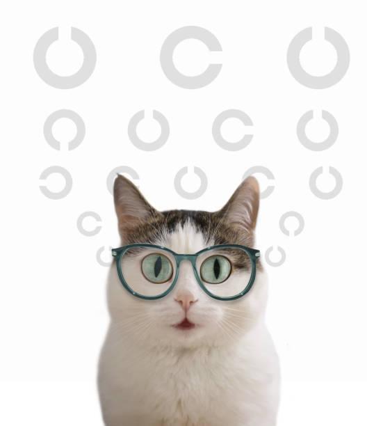 blauäugige lustige katze im auge anblick korrektur brille nahe foto - katzenschrank stock-fotos und bilder