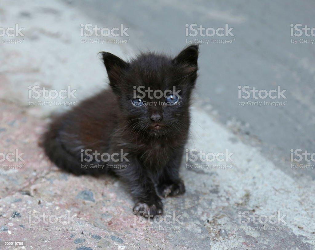 Blue Eyed Kitten Eye Contact stock photo