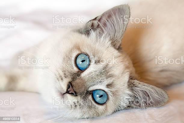 Blue eyes kitten picture id495910314?b=1&k=6&m=495910314&s=612x612&h=0ec0kdoew zbcst3ajiwv99k33m0ppc2243jrcarvwm=
