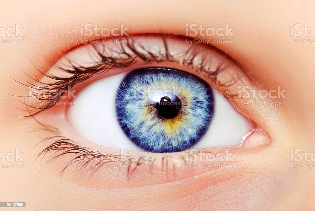Blaue Augen Makro – Foto