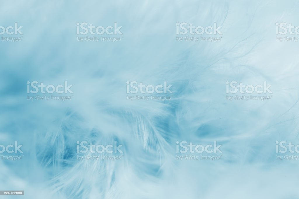 Blue Feather Background stock photo