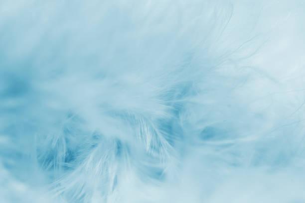 Azul de fundo de penas - foto de acervo