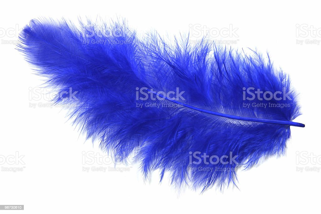 Blue feather royalty-free stock photo