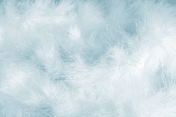 Azul Feathers - foto de stock