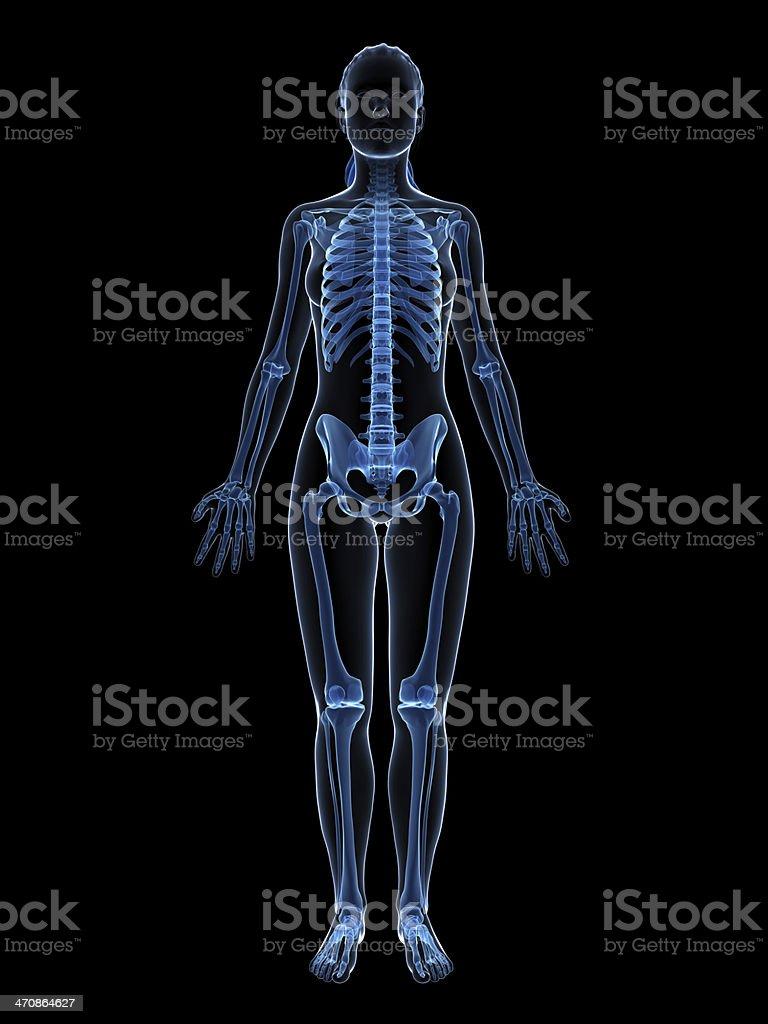 blue female skeleton - full body stock photo