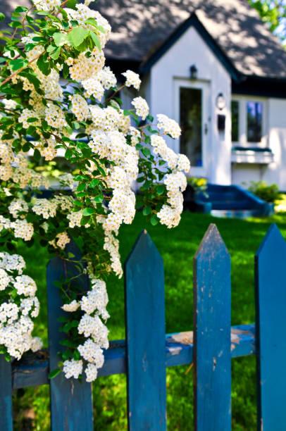 blue zaun mit weißen blumen - lattenzaun garten stock-fotos und bilder