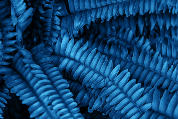 Blauer Farn blättert Textur – Foto
