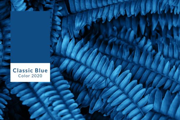 blauwe fern bladeren textuur - kleurenwaaier stockfoto's en -beelden