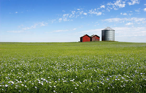 blue field - great plains stock photos and pictures
