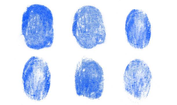 blue fingerprints - fingerprint stock photos and pictures
