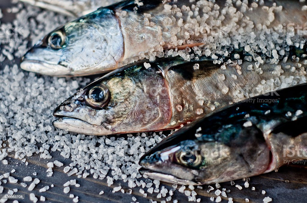 blue fish just caught fresh great for a healthy diet stock photo