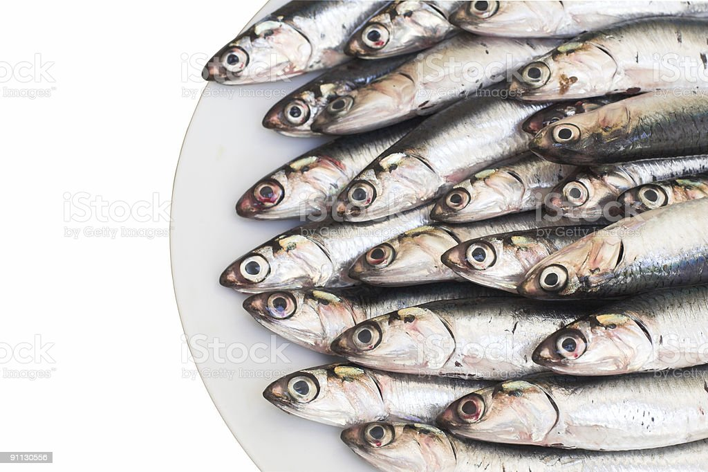 Blue fish (anchovies) stock photo