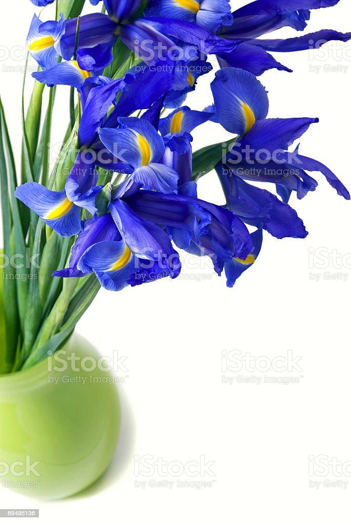 blue flag iris flowers in a lime green vase isolated royaltyfri bildbanksbilder