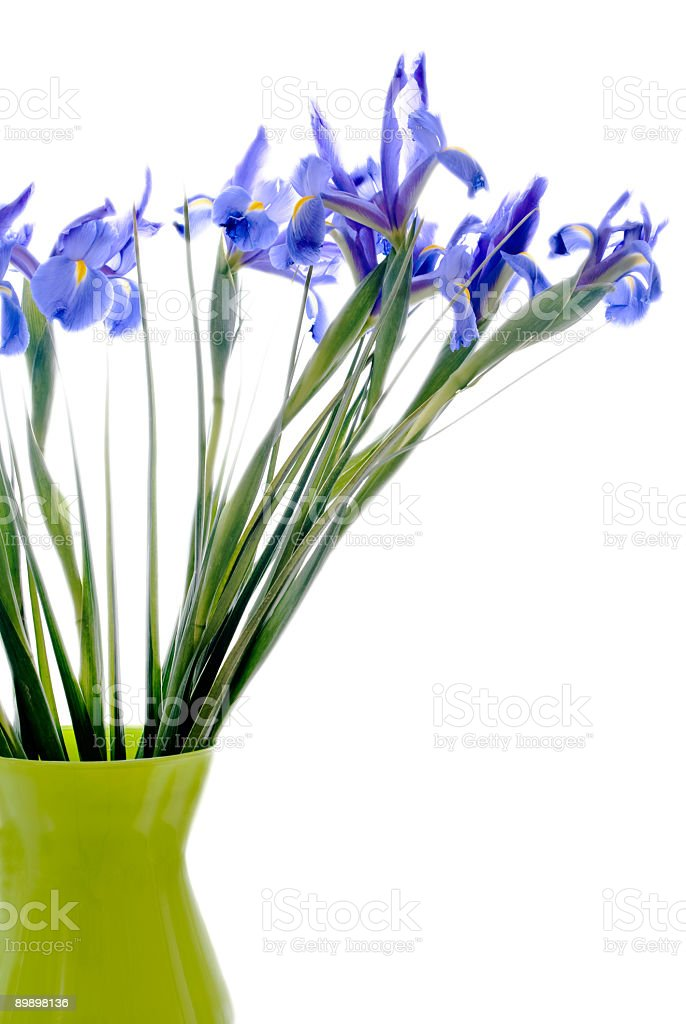 blue flag iris with stems in green vase isolated white royalty-free stock photo