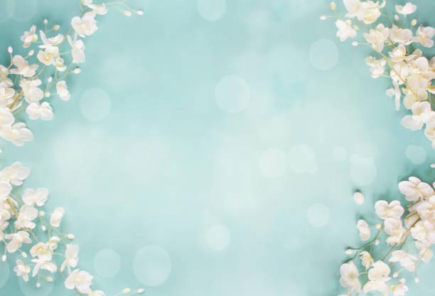 blå blommig bokeh spring bakgrund - maj bildbanksfoton och bilder