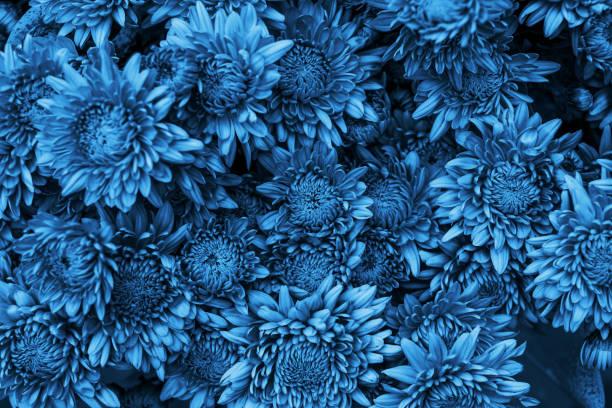 Blaue Blume Hintergrund – Foto