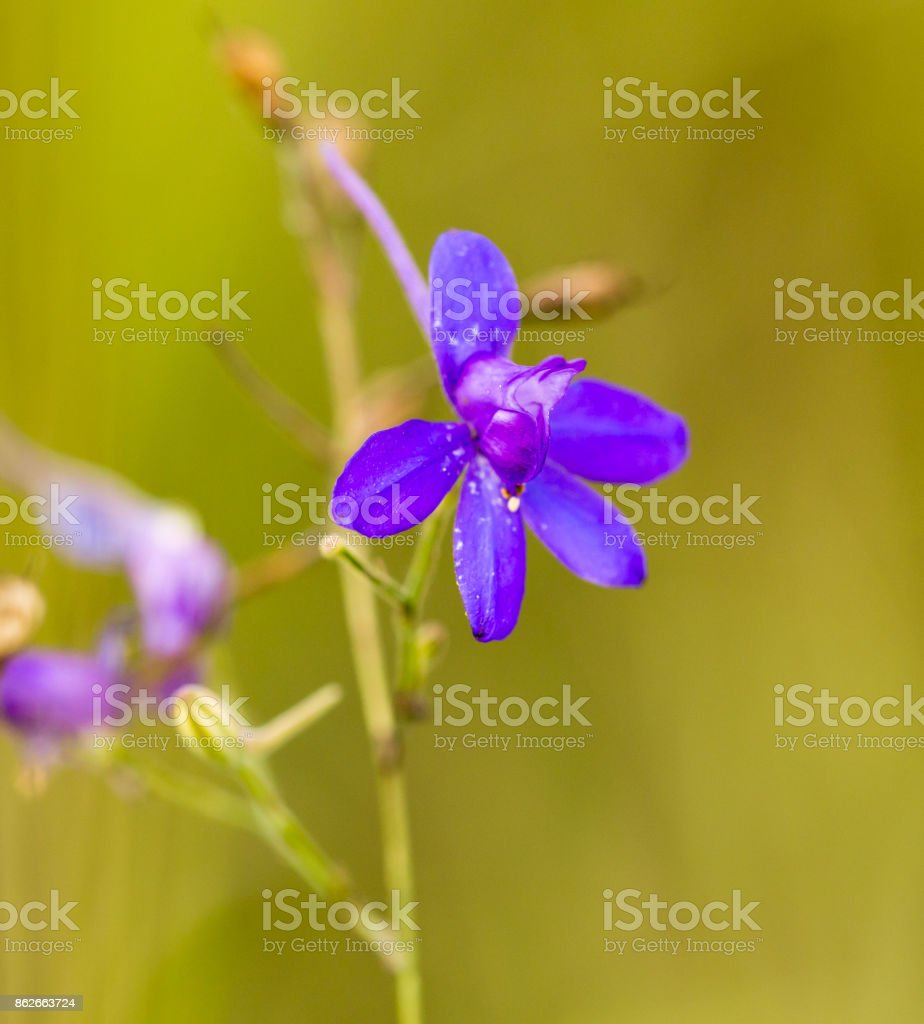 blue flower in the nature stock photo