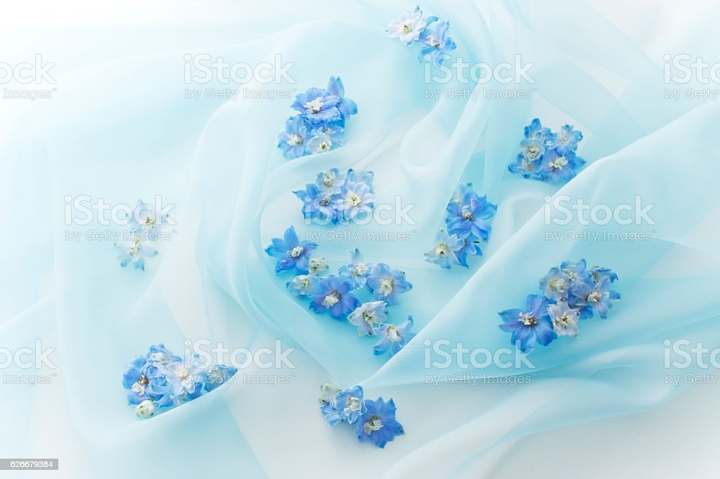 Blue flower on blue organdy stock photo