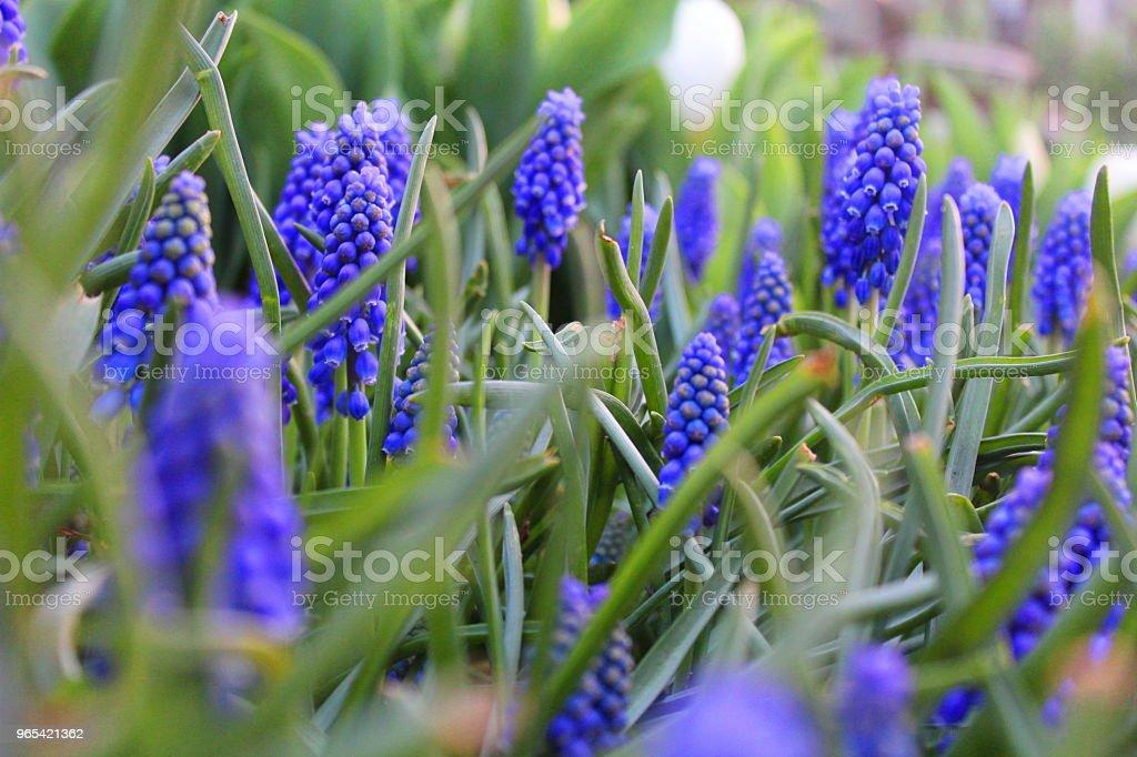 Blue flower zbiór zdjęć royalty-free