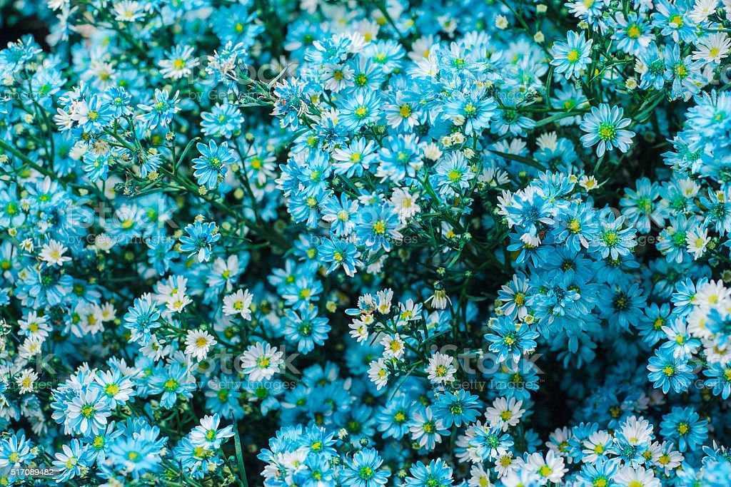 Blue flowers background. stock photo