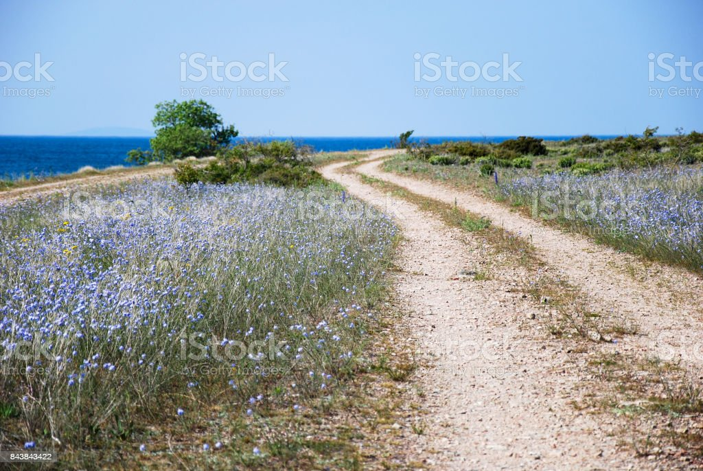 Blue flowers by a winding coastal dirt road stock photo