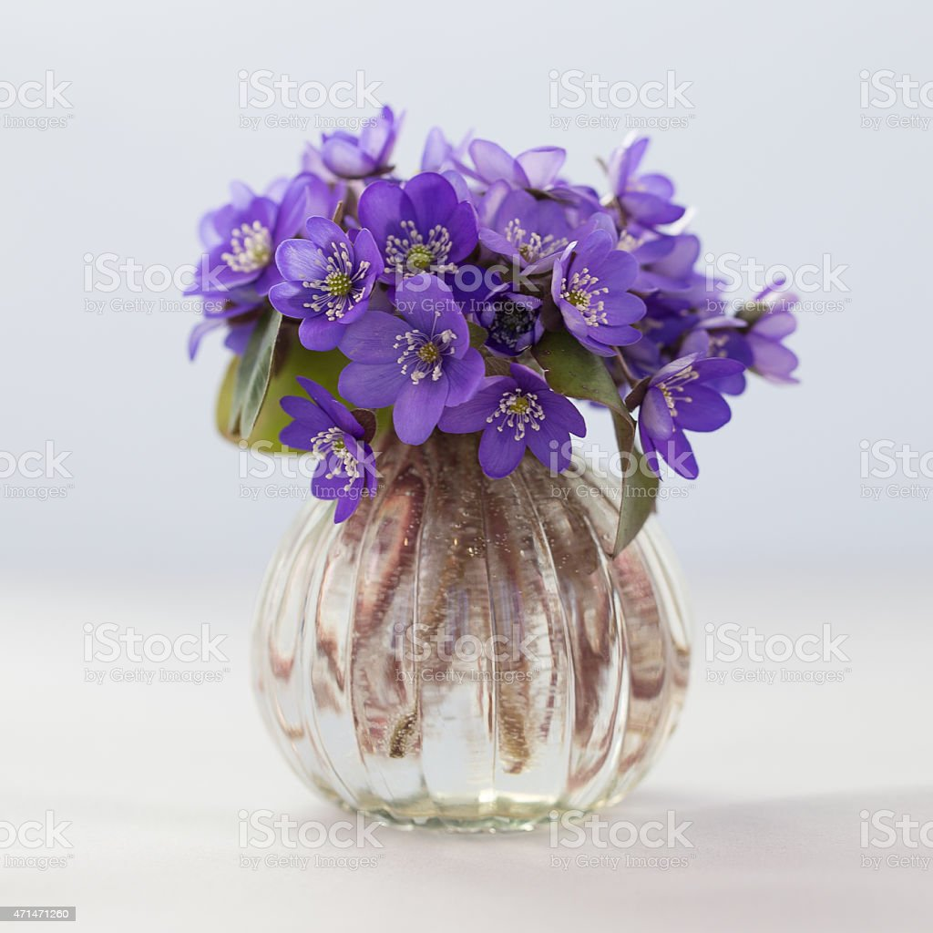 Blue flowers in the vase stock photo