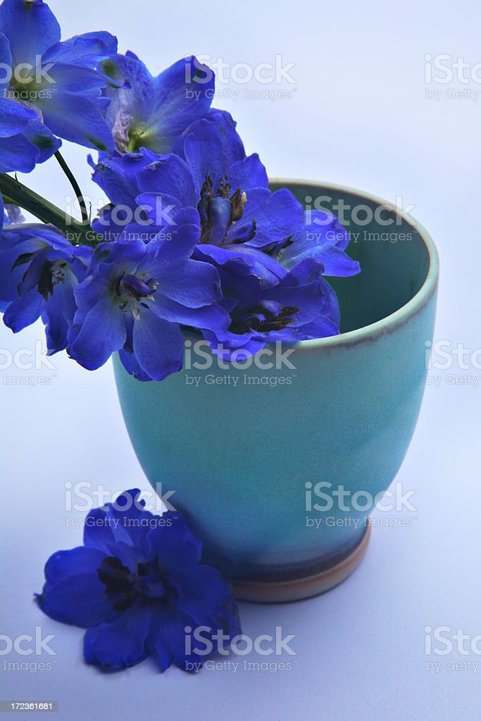 Blue flowers. royalty-free stock photo