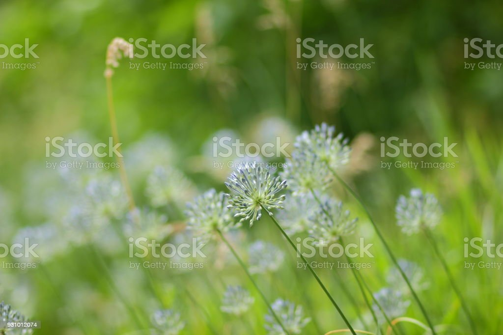 Blue flowers, spring flowers in the botanical garden, blank for a postcard on a holiday, a bouquet of flowers for a beloved woman, a floral pattern, beautiful blue wildflowers, art stock photo