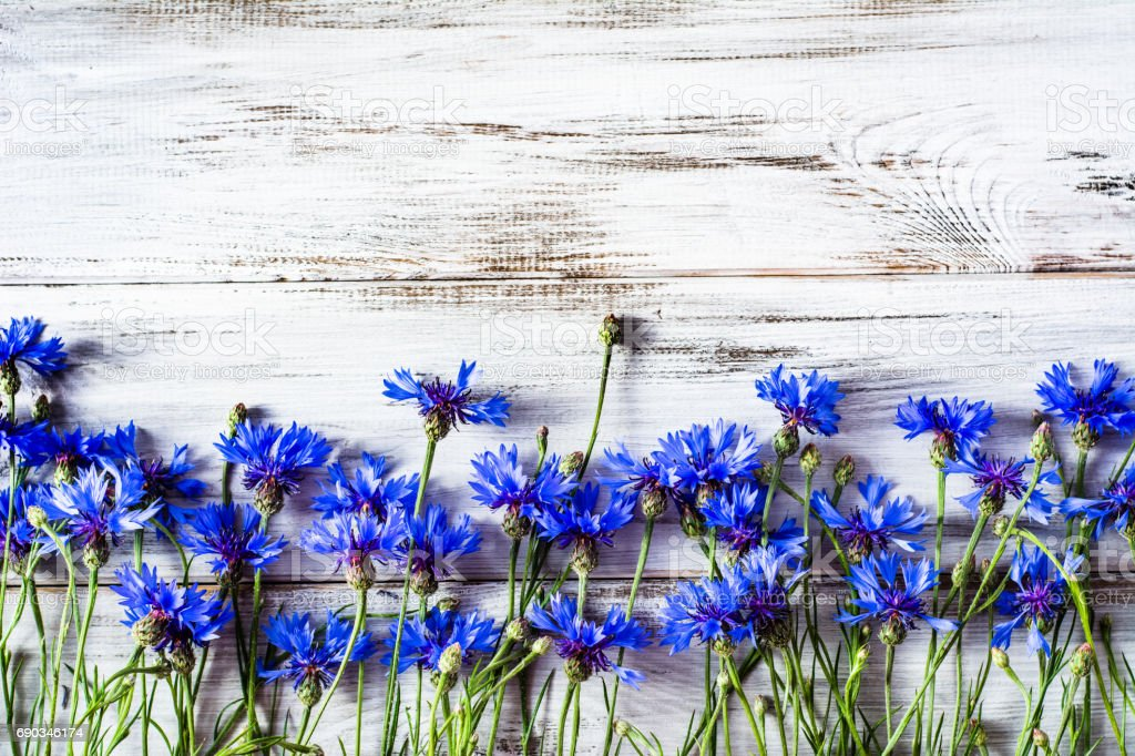 Blue flowers, summer wildflowers on wooden background, overhead stock photo