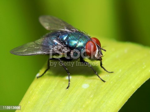 [b]More flies, including house flies, fruit flies, horse flies, etc:[/b]  [url=/search/lightbox/5204920][IMG]http://i262.photobucket.com/albums/ii96/arlindo71/f.jpg[/IMG] [/url]  [b]Other insects:[/b]  [url=/search/lightbox/5204894][IMG]http://i262.photobucket.com/albums/ii96/arlindo71/b.jpg[/IMG] [/url][url=/search/lightbox/5204899][IMG]http://i262.photobucket.com/albums/ii96/arlindo71/c.jpg[/IMG] [/url][url=/search/lightbox/5204902][IMG]http://i262.photobucket.com/albums/ii96/arlindo71/a.jpg[/IMG] [/url][url=/search/lightbox/5204906][IMG]http://i262.photobucket.com/albums/ii96/arlindo71/l.jpg[/IMG] [/url][url=/search/lightbox/5204922][IMG]http://i262.photobucket.com/albums/ii96/arlindo71/w.jpg[/IMG] [/url][url=/search/lightbox/5204924][IMG]http://i262.photobucket.com/albums/ii96/arlindo71/bt.jpg[/IMG] [/url][url=/search/lightbox/5204928][IMG]http://i262.photobucket.com/albums/ii96/arlindo71/m.jpg[/IMG] [/url][url=/search/lightbox/5204929][IMG]http://i262.photobucket.com/albums/ii96/arlindo71/s.jpg[/IMG] [/url][url=/search/lightbox/5204931][IMG]http://i262.photobucket.com/albums/ii96/arlindo71/bl.jpg[/IMG] [/url][url=/search/lightbox/5204933][IMG]http://i262.photobucket.com/albums/ii96/arlindo71/h.jpg[/IMG] [/url][url=/search/lightbox/5205060][IMG]http://i262.photobucket.com/albums/ii96/arlindo71/Insects.jpg[/IMG][/url]