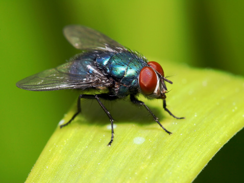 [b]More flies, including house flies, fruit flies, horse flies, etc:[/b]  [url=/search/lightbox/5204920][IMG]http://i262.photobucket.com/albums/ii96/arlindo71/f.jpg[/IMG] [/url]  [b]Other insects:[/b]  [url=/search/lightbox/5204894][IMG]http://i262.photobucket.com/albums/ii96/arlindo71/b.jpg[/IMG] [/url][url=/search/lightbox/5204899][IMG]http://i262.photobucket.com/albums/ii96/arlindo71/c.jpg[/IMG] [/url][url=/search/lightbox/5204902][IMG]http://i262.photobucket.com/albums/ii96/arlindo71/a.jpg[/IMG] [/url][url=/search/lightbox/5204906][IMG]http://i262.photobucket.com/albums/ii96/arlindo71/l.jpg[/IMG] [/url][url=/search/lightbox/5204922][IMG]http://i262.photobucket.com/albums/ii96/arlindo71/w.jpg[/IMG] [/url][url=/search/lightbox/5204924][IMG]http://i262.photobucket.com/albums/ii96/arlindo71/bt.jpg[/IMG] [/url][url=/search/lightbox/5204928][IMG]http://i262.photobucket.com/albums/ii96/arlindo71/m.jpg[/IMG] [/url][url=/search/lightbox/5204929][IMG]http://i262.photobucket.com/albums/ii96/arlindo71/s.jpg[/IMG] [/url][url=/search/lightbox/5204931][IMG]http://i262.photobucket.com/albums/ii96/arlindo71/bl.jpg[/IMG] [/url][url=/search/lightbox/5204933][IMG]http://i262.photobucket.com/albums/ii96/arlindo71/h.jpg[/IMG] [/url][url=/search/lightbox/5205060][IMG]http://i262.photobucket.com/albums/ii96/arlindo71/Insects.jpg[/IMG][/url]