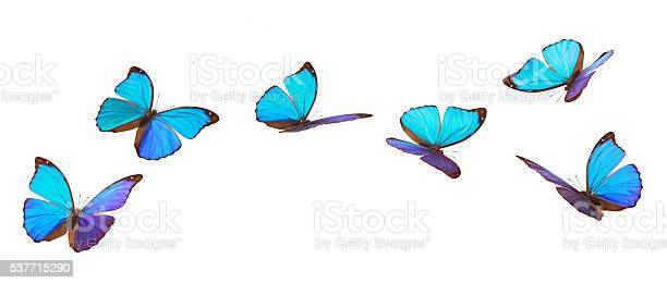 Blue flying butterflies picture id537715290?b=1&k=6&m=537715290&s=612x612&h=7fuhquzquw5pwoxaglwa 87mcmlade8gy7zkyyhlwoc=