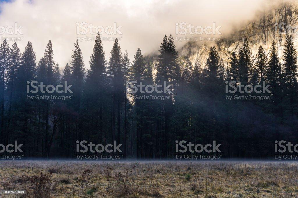 Blue Fog Around Pine Trees in Yosemite in Winter stock photo