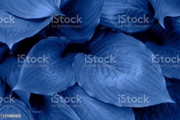 Photo of Blue foliage with raindrops.