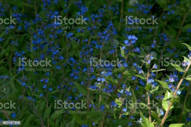 Foto de Blueseme Que Não Têm e mais fotos de stock de Azul