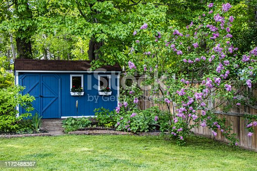 a blue garden shed surrounded by green trees, gardens, lawn and purple lilac bushes