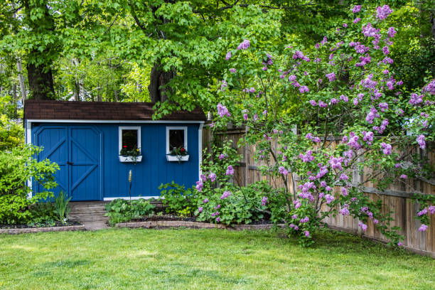 Blue garden she shed in the backyard a blue garden shed surrounded by green trees, gardens, lawn and purple lilac bushes shed stock pictures, royalty-free photos & images