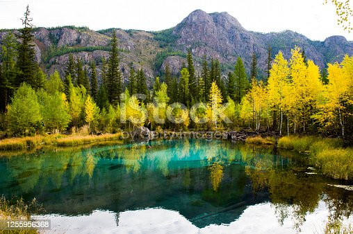 Blue Geyser lake in the Altai mountains on the background of a forest. Landscape, pool.