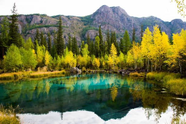 blauw meer geyser in de bergen altai op de achtergrond van een bos. landschap, zwembad. - altai nature reserve stockfoto's en -beelden
