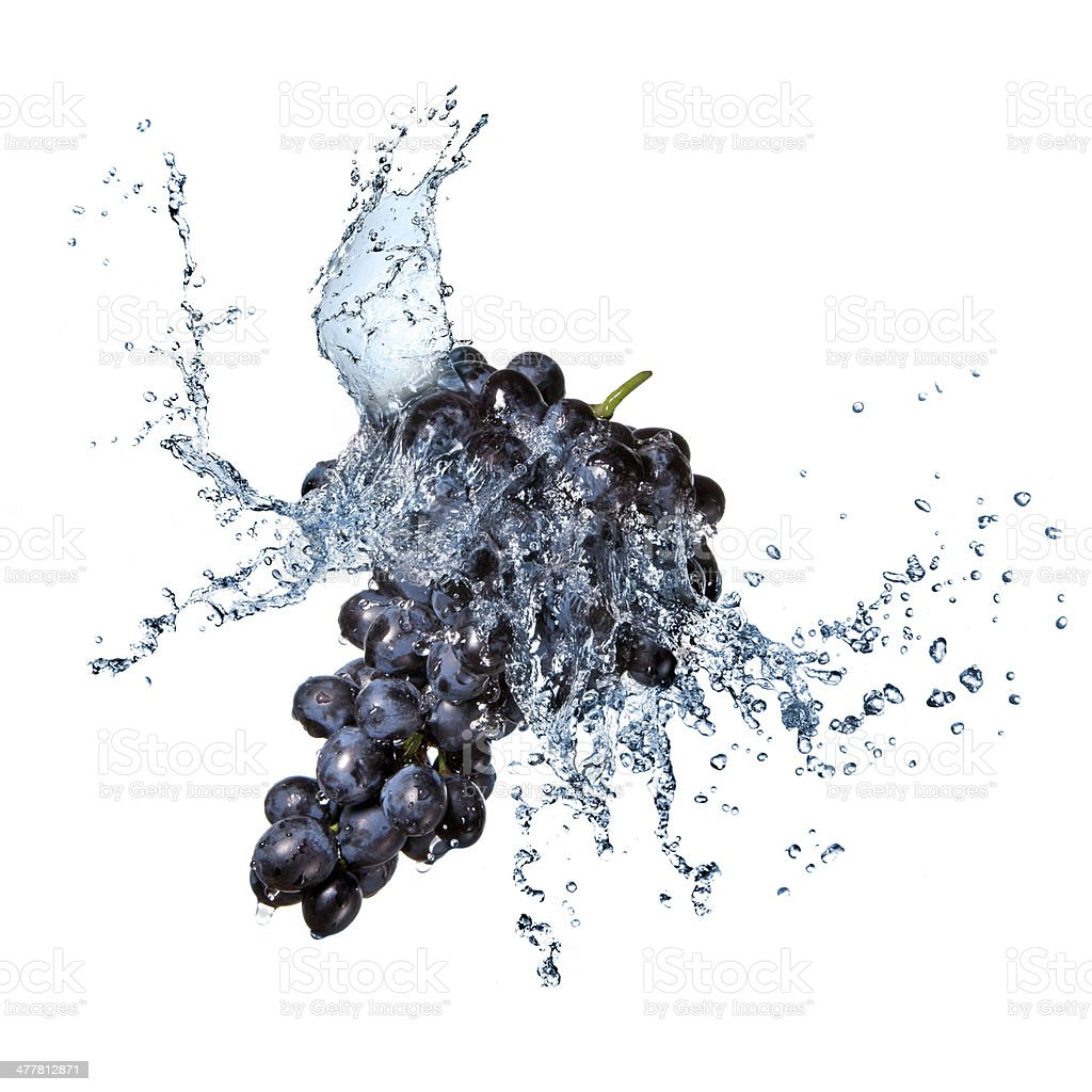blue grape with water splash isolated on white royalty-free stock photo