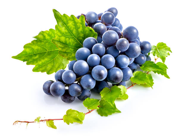 Blue grapes with green leaf healthy eating. stock photo