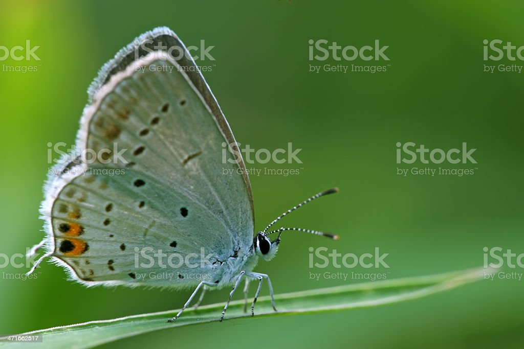 blue gray butterfly on the grass stock photo