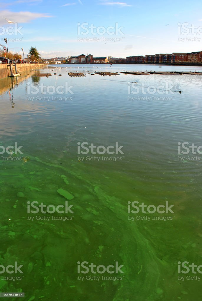 blue green algae stock photo