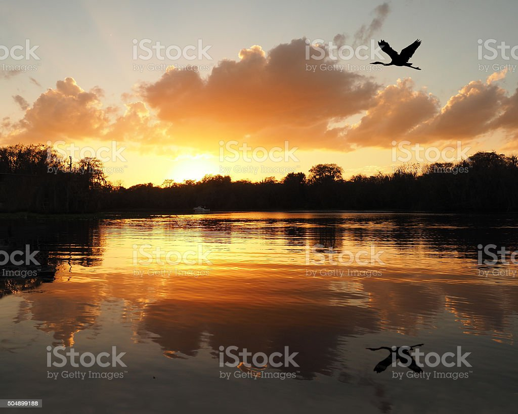 Blue Heron Flies Over River as the Sun Sets stock photo