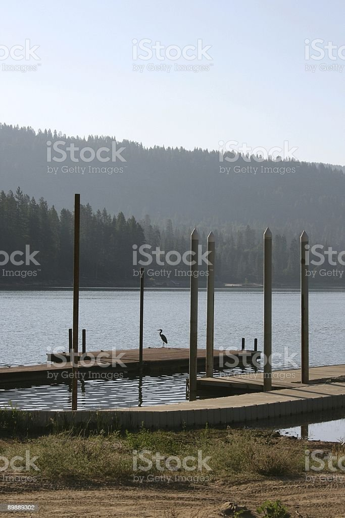 blue heron royalty-free stock photo