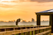 A heron sits along the handrail of a boardwalk - set agains a warm sky and a foggy marsh in the wetlands
