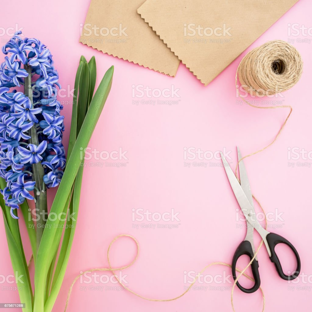 Blue hyacinth, craft paper, scissors and twine on pink background. Flat lay, Top view. Feminine workspace royalty-free stock photo